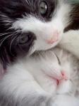Catnap12