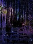 Goodnight on Fairie Swamp Garden (Photo credit: echoroo)