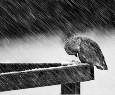 BirdinRain