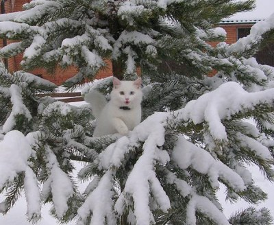 WhiteKitteninSnow
