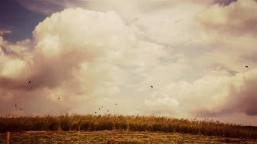 birds-in-field