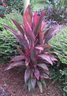 Exotic_Plant