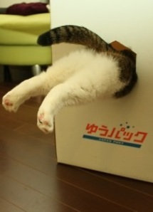 cat-in-box-1