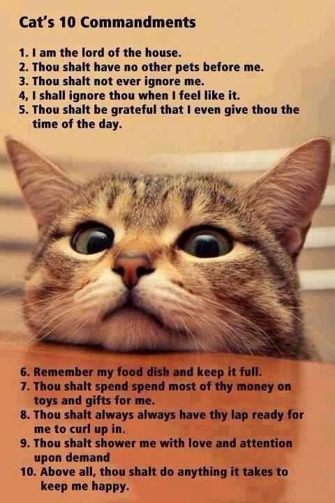 Cats_10_Commandments