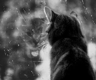 Melancholy_Cat