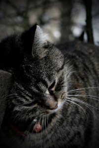 Melancholy_Cat2