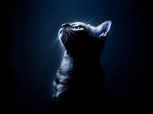 Melancholy_Cat3