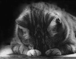 Melancholy_Cat4