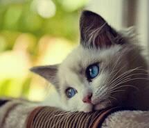 Melancholy_Cat5