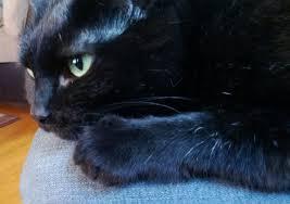 Melancholy_Cat6
