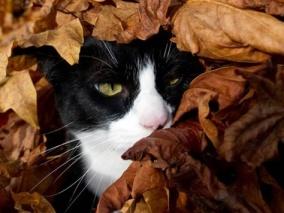 Cat-in-Leaves