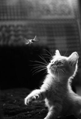 Cat-on-Hunt
