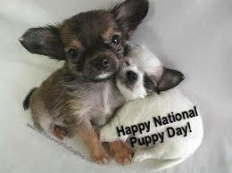 Happy_Puppy_Day
