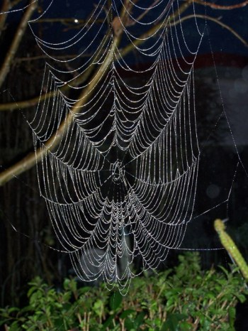 A Web in the Morning Dew @ Life in the Foothills
