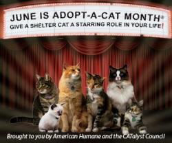 adopt-a-cat-month1