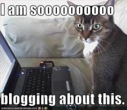 blogger-cat