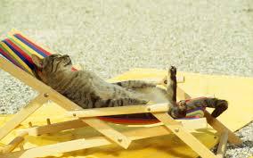 cat-lounging