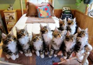Multiple-Cats