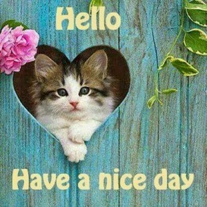 Cat-Hello-Have-a-nice-day
