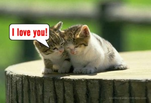 Love-cat-kitten