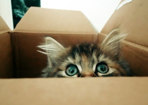 l-only-wants-to-play-with-empty-box