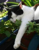catnip_cat_grass_and_greens_for_your_cat_s1