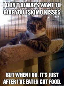 cat_funny