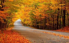 Autumn_road