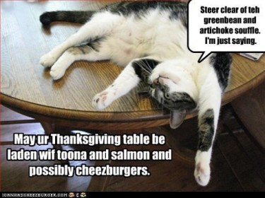 Thanksgiving_catnip