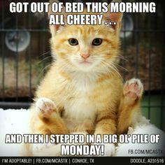 Monday-cat1