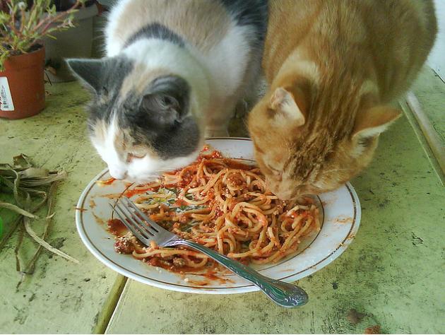 Spaghetti-cats (1)