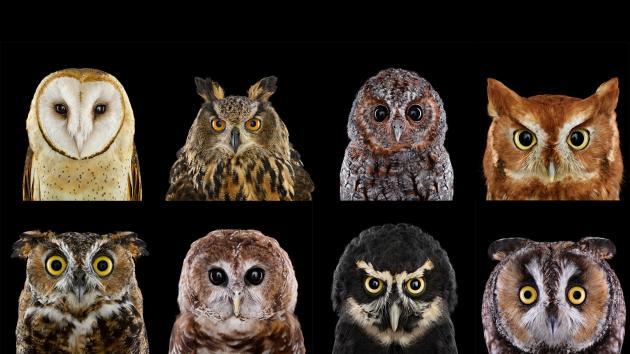 OwlGrid