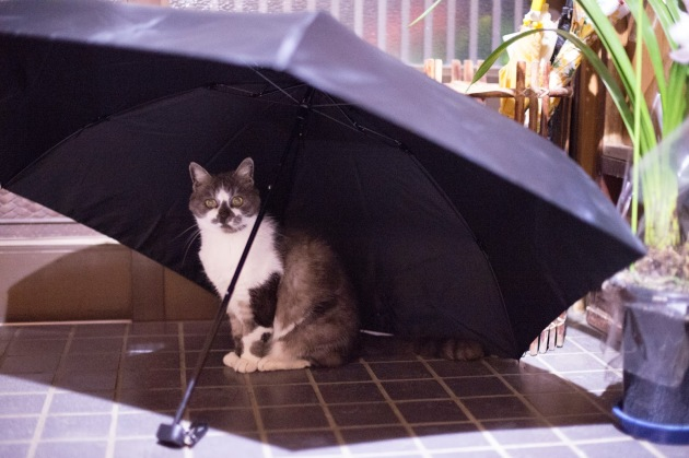 Umbrella-cat