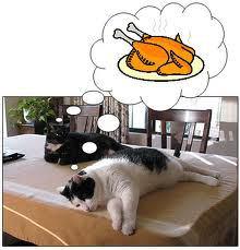 cat-thanksiving1