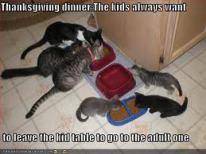 cat-thanksiving10
