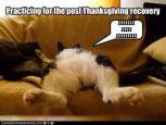 cat-thanksiving12
