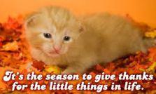 cat-thanksiving3